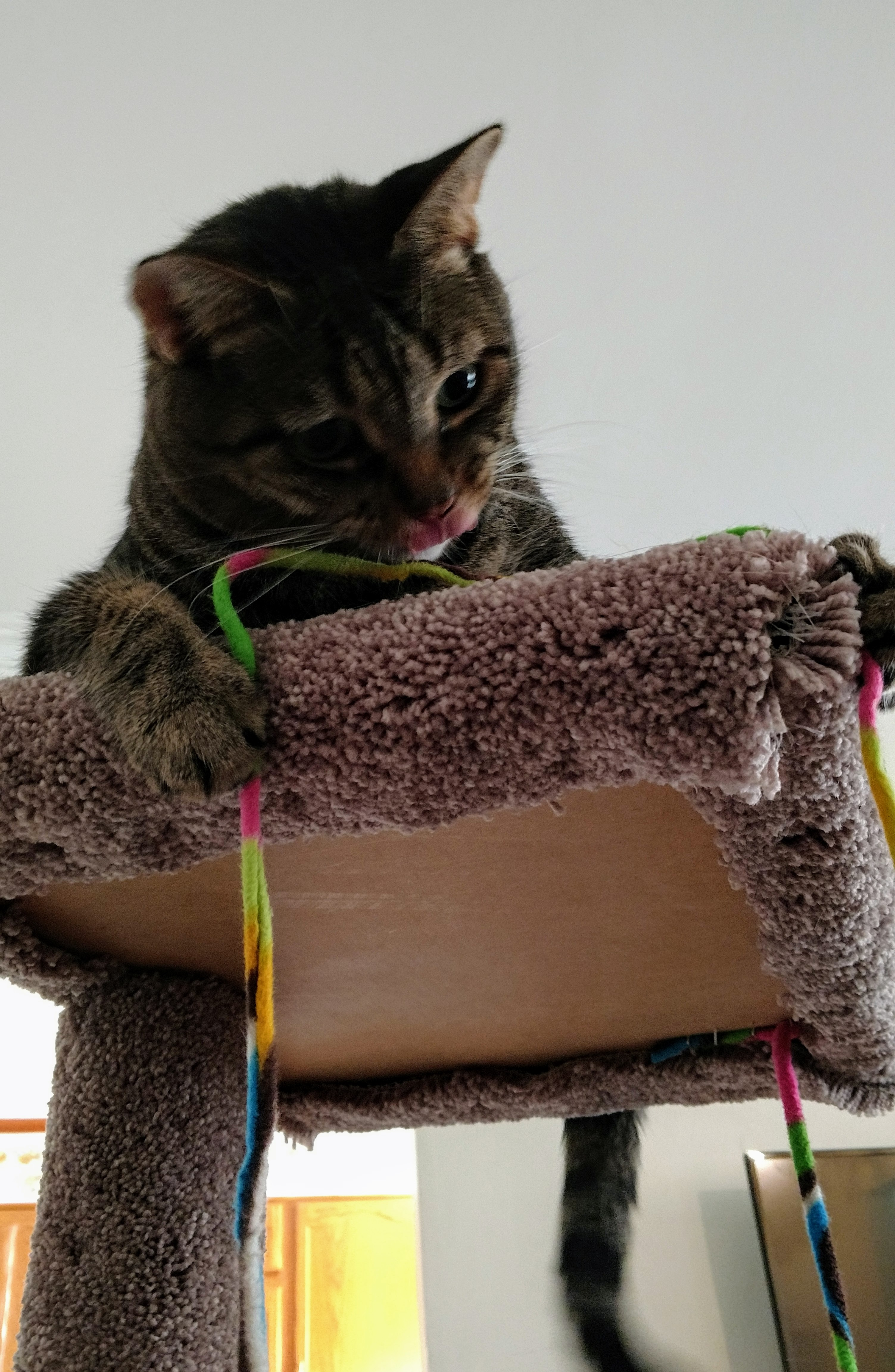 We Built This Cat Tower Misadventures In Home Renovation