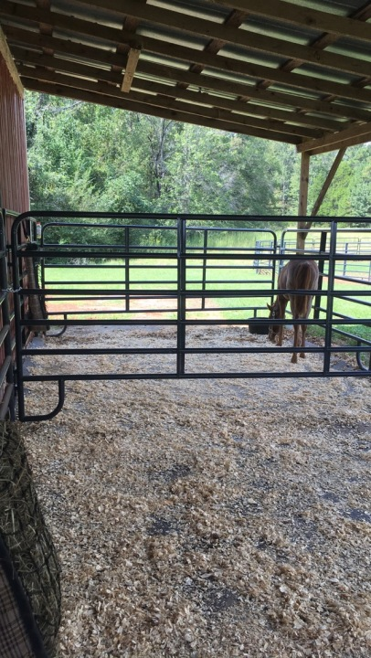 Cedar shavings laid out in each of the three stalls.